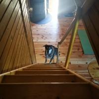 Treppe von der Schlafgalerie zum Wohnbereich
